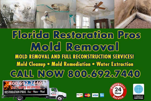 Florida Mold Remediation & Cleanup
